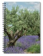 Olive Trees Of Provence Spiral Notebook