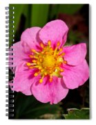 Olympia Pink Spiral Notebook