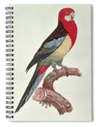 Omnicolored Parakeet Spiral Notebook