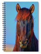 Onaqui Wild Stallion Portrait Spiral Notebook