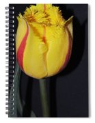 Once Again Spring Spiral Notebook