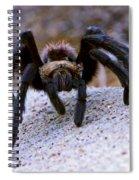 One Big Hairy Spider Spiral Notebook