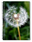 One Dandy Lion Spiral Notebook