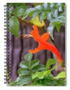 One Lone Flower Remains On The Cape Honeysuckle Spiral Notebook