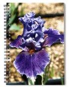One Sole Iris In Bloom Spiral Notebook