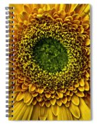 Oo Spiral Notebook