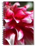 oozing With Life Dahlia Spiral Notebook