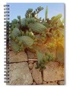 Opuntia Cactus In The Sunset Spiral Notebook