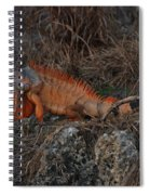 Oranage Iguana Spiral Notebook