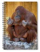 Orang Utang Eating Spiral Notebook