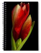 Orange Amaryllis Bloom Spiral Notebook