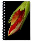 Orange Amaryllis Hippeastrum In The Beginning 2-21-10 Spiral Notebook