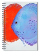 Orange And Blue Discus Fish Spiral Notebook
