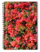 Orange And Colral-pink Flowers 2 Spiral Notebook