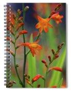 Orange And Green Spiral Notebook