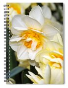 Orange And Yellow Double Daffodil Spiral Notebook