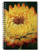 Orange And Yellow Strawflower Spiral Notebook