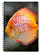 Orange Aquarium Fish In Zoo Spiral Notebook