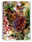 Orange Ball Corallimorph Anemone Spiral Notebook