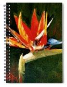 Orange Bird Of Paradise Spiral Notebook