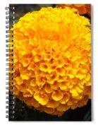 Orange Bloom Spiral Notebook