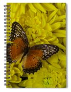 Orange Butterfly On Yellow Mums Spiral Notebook