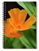 Orange California Poppies Spiral Notebook
