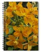 Orange Cluster Spiral Notebook