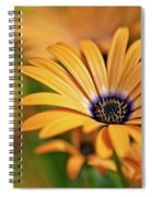 Orange Crush Spiral Notebook