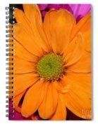 Orange Crush Daisy Spiral Notebook