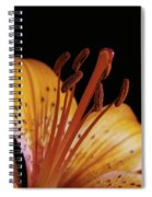 Orange Day Lilly On Black Spiral Notebook