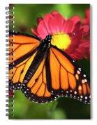 Orange Drift Monarch Butterfly Spiral Notebook