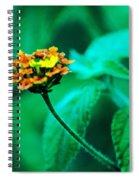 Orange Flower II Spiral Notebook