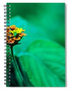 Orange Flower Iv Spiral Notebook