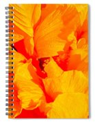 Orange Frills Spiral Notebook