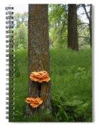 Orange Fungi On A Tree Spiral Notebook