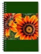 Orange Gazania Spiral Notebook