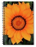 Golden Gazania Spiral Notebook