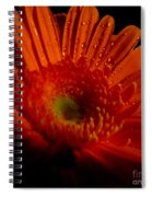 Orange Gerbera Spiral Notebook