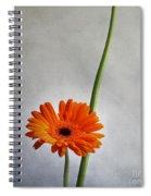 Orange Gernera Spiral Notebook