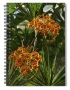 Orange Globes Spiral Notebook