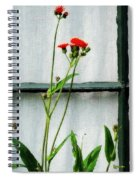 Orange Hawkweed Over Gray Muslin Spiral Notebook