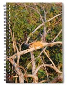Orange Iguana  Spiral Notebook