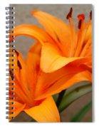 Orange Lilies 2 Spiral Notebook