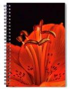 Orange Lilly  Spiral Notebook