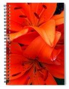 Orange Lily Closeup Digital Painting Spiral Notebook