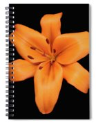 Orange Lily On Black Spiral Notebook