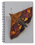 Orange Mint Moth - Pyrausta Orphisalis Spiral Notebook
