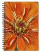 Orange Orange Orange Spiral Notebook