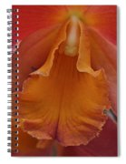 Orange Orchid 3 Spiral Notebook